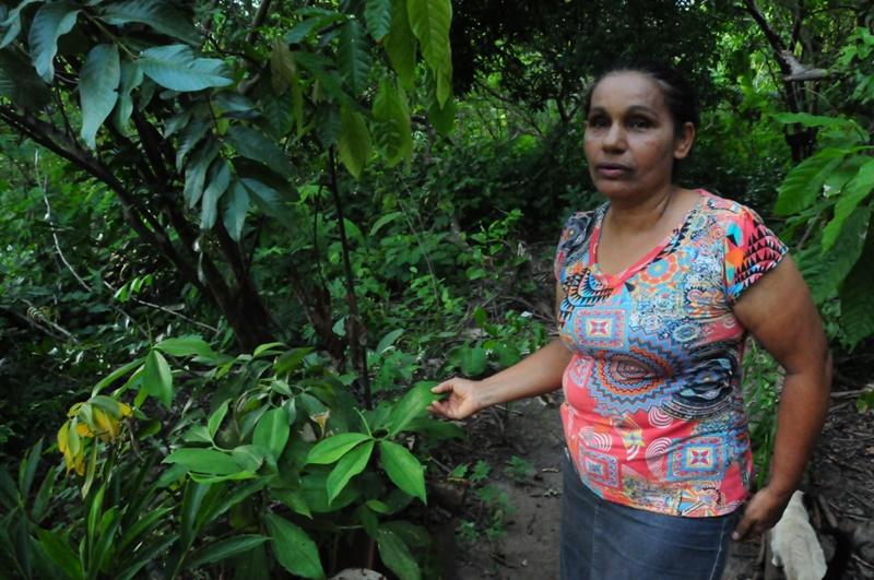 Plantas medicinais são produzidas em sistemas agroflorestais no assentamento Mariana