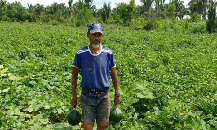 Agricultores do extremo norte do Estado colhem resultados positivos com adoção de práticas agroecológicas