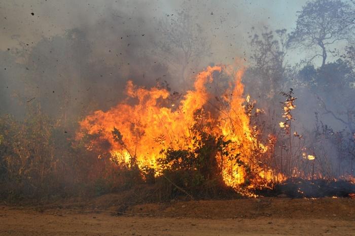 Governo Tocantins anuncia força-tarefa de combate às queimadas e contratação de brigadistas