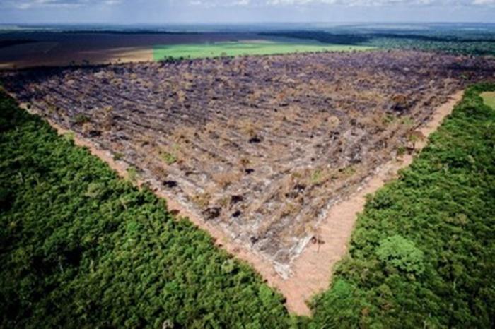 MPF cria Grupo de Intervenção Rápida contra Superdesmatamentos na Amazônia