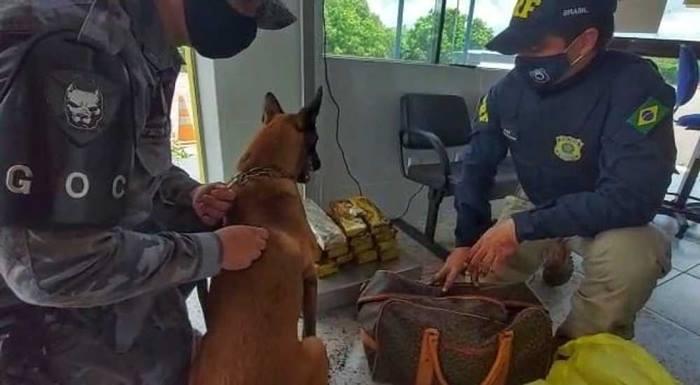 PM e PRF apreendem 11,4 kg de maconha escondida dentro de um ônibus em Paraíso