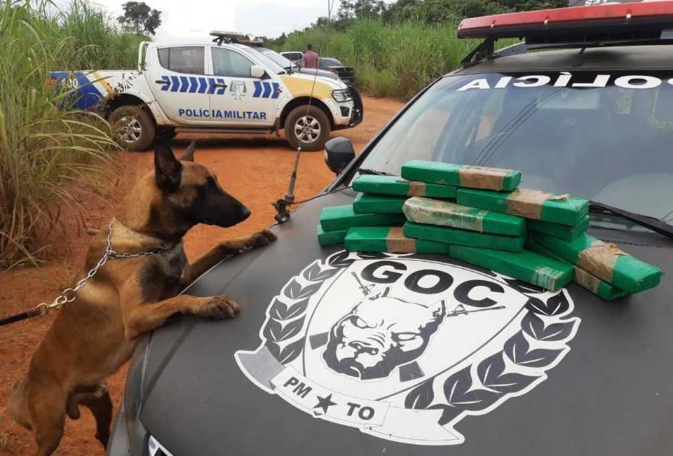 Operação da PMTO e PCTO desarticula tráfico de drogas em Miracema